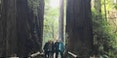 muir-giant-redwoods-tours-san-francisco-jeep-tours-1920.jpg