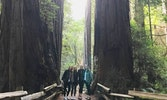 Choose from two Muir Woods and Sausalito Tours. For 2 to 6 guests per Jeep